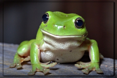 LOVELY FROG - NATURE, FROG, LOVELY, IMAGE