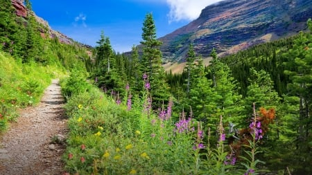 Glacier National Park, Montana, USA - mountain, greenery, national park, wildflowers, path, slope, walk, Glacier, grass