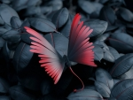 Butterfly Leaves Artwork