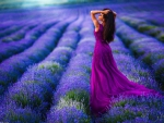 Morning in Lavender Field