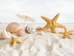Seashells and starfish on the beach
