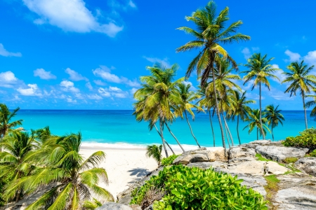 Tropical beach - palms, rest, vacation, exotic, Barbados, ocean, beautiful, sky, sea, beach, paradise, summer, tropics, sands