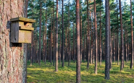 Birdhouse in Forest - Latvia, birdhouse, forest, trees