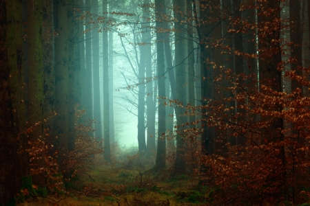 Forest - atmospheric, cyan, dark, nature, forests, trees, mood, light, photography