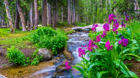Forest stream - forest, stream, wildflowers, summer, beautiful, river, park, brook, trees