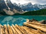 Logs on the Shore of Moraine Lake