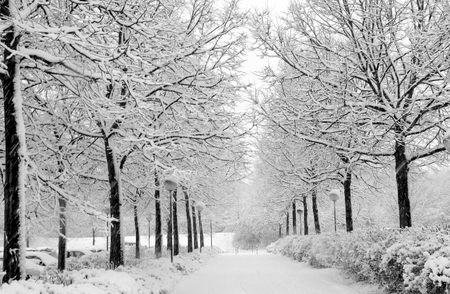 Winter Imagery - frosty, snow, nature, road, trees, winter