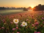 Meadow at Sunrise