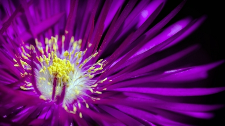 Flower - vara, purple, macro, summer, yellow, close, flower, nature