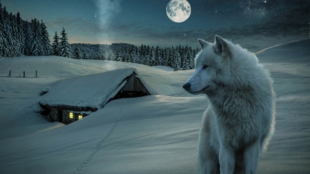 Wolf - fantasy, cottage, lup, wolf, white, winter, animal, iarna, snow