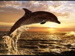 Dolphin our Friends .....Highly Intelligent Animals
