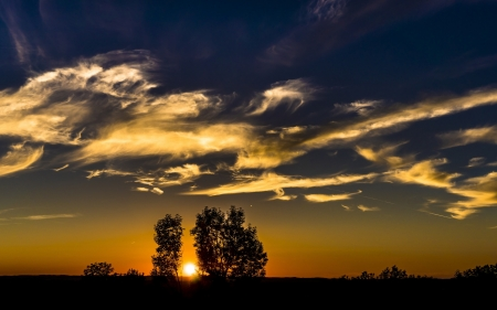 golden sunset - silhouettes, sunset, sky, trees
