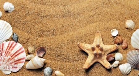 Bye-bye, Summer! - wallpaper, summer, nature, animals, starfish, holiday, fish, beach, wild, wildlife, wild animals