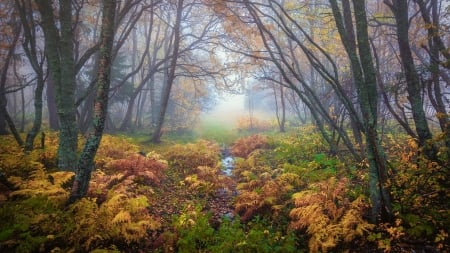 Magical Colors In Autumn, Trondheim, Norway - colors, leaves, trees, mist, fern