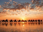 Golden Sunset On Cable Beach, Australia