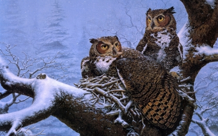 Owls in the Winter - owl, tree, two, snow, winter