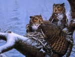 Owls in the Winter