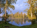Birches by Lake