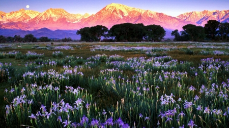 Owens Valley, California - summer, blossoms, landscape, mountains