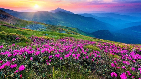 Valley of Flowers, India - mountains, national park, blossoms, colors, sunset, sky