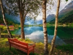 A bench under birch trees near lake