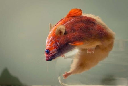 Fishmouse - orange, luminos, mouse, summer, creature, fish, fantasy, ronit, vara, soricel