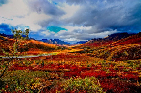 Indian Summer, Yukon - fall, colors, sky, canada, clouds