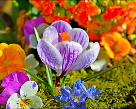 Beautiful Flowers - flowers, petals, crocus, bloom