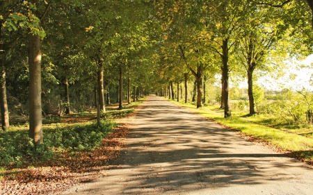 Avenue - avenue, road, alley, trees