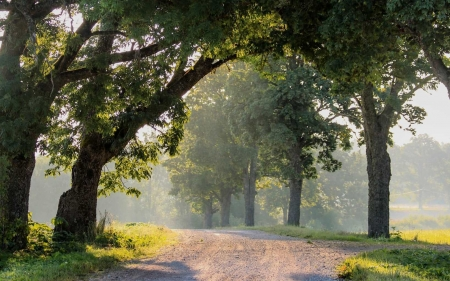 Morning Road in Latvia - Latvia, path, trees, road, mist