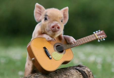 Cute Singing Pig in Cowboy Fashion - Strings, Funny, Pig, Log, Small, Guitar, Balancing, Grass, Cute, Guitar Playing, Flowers