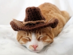 Cute Cat Resting after Roundup :)