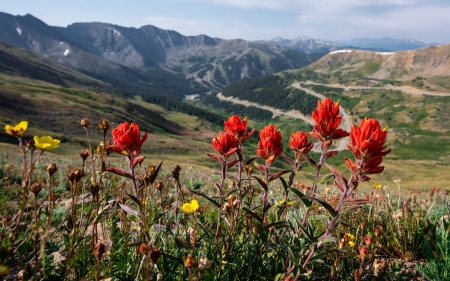 Mountain Meadow - flowers, landscape, meadow, mountains