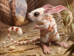 Canyon jerboa