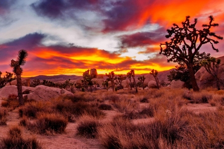 Joshua Tree National Park, California - nature, sky, photo, colors, sunset, trees