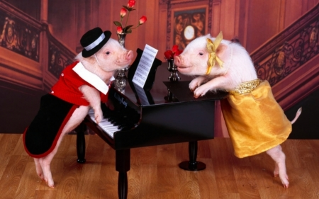 Moonlight Sonata - Staircase, Love, Couple, Pigs, Funny, Costumes, Elegant, Adorable, Sheet Music, Cute, Piano, Sequins, Falling in Love, Roses, Hat