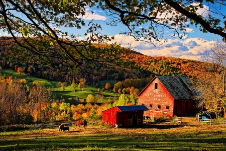 Sunset at Maple Grove Farm, Vermont, New England - trees, horses, fence, Farmhouse, leaves, autumn, stable