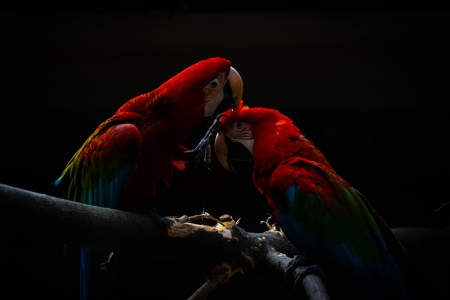 ❤️ - Animal, Macaw, Colorful, Birds