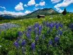 Wildflowers in Colorado