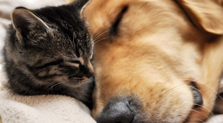 Friendship - dogs, animals, cute, wallpaper, pets, cats