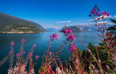 Hardangerfjord - wildflowers, fjord, beautiful, river, lake, Norway, sea, view, sky, mountain