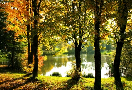 Pond in autumn park - park, beautiful, trees, foliage, fall, autumn, lake, pond, leaves, serenity, reflection, tranquility