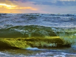Baltic Sea Wave