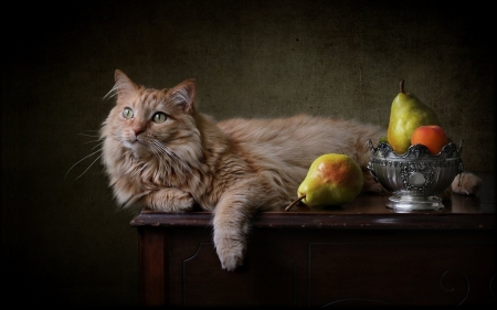 Still Life with Cat - cat, fruits, bowl, table, pears, piers