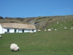 Cottage with sheep in Co. Donegal, Ireland