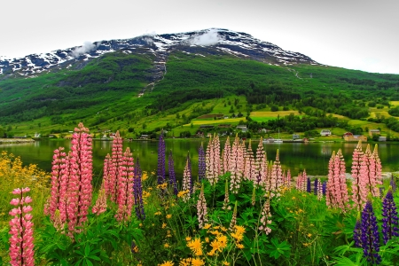 Mountain and lake in Norway - lupin, Norway, lake, mountain, wildflowers, beautiful