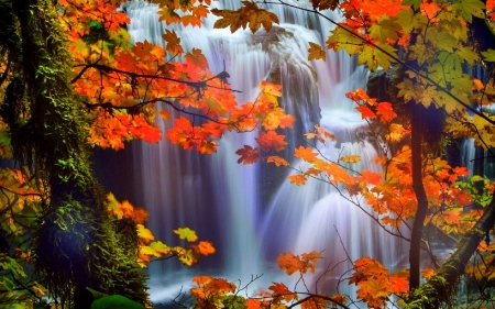 A WATERFALL - orange, waterfall, nature, Autumn, foliage, Fall, red, HD, water, photography, blue