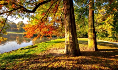 Autumn in the park - tree, autumn, beautiful, park, lake, foliage, fall, pond, serenity, reflection