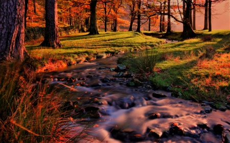the brook flows in the forest - forest, stream, autumn, trees