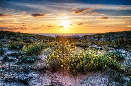Wildflowers on the Sand Dunes - clouds, sky, landscape, flowers, sunset, sea